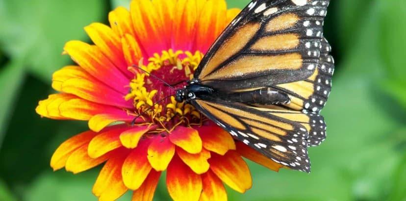 Looking for butterflies