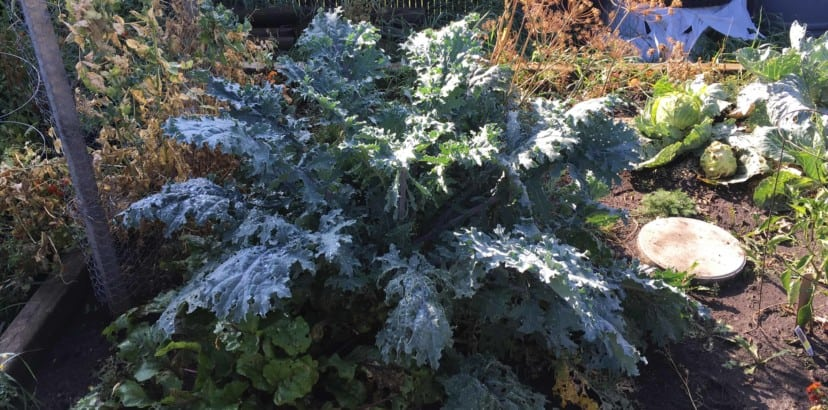 Putting a garden to bed for the winter