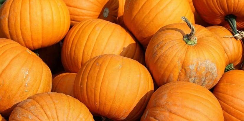 'Tis the season for all things pumpkin