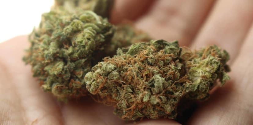 Cannabis legalization brings challenges