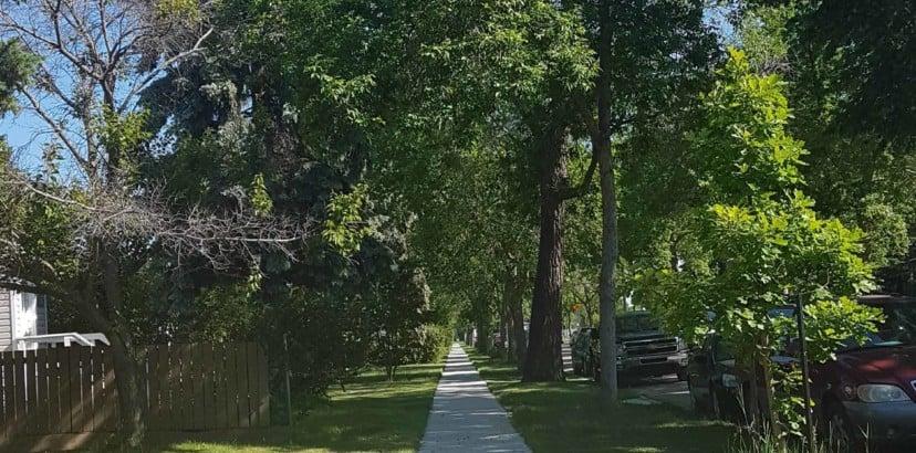 Create an original slogan for Spruce Avenue