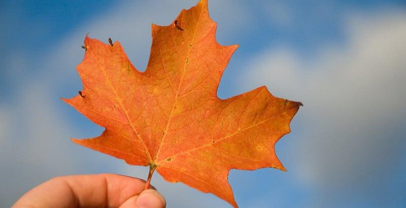 Should we celebrate Canada Day?